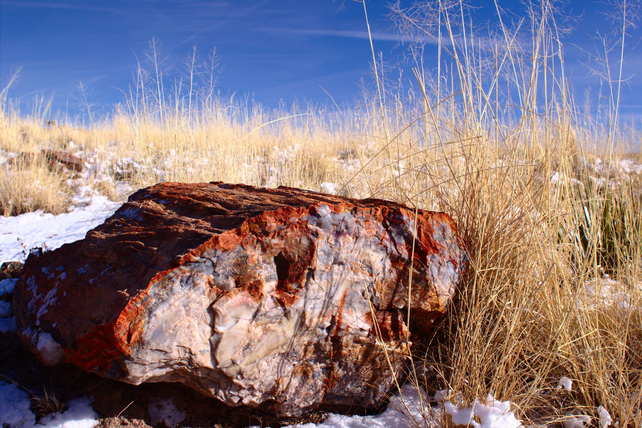 One of the fossilized wood at the petrified forest national park one of the fossilized wood at the petrified forest national park arizona usa sciox Choice Image