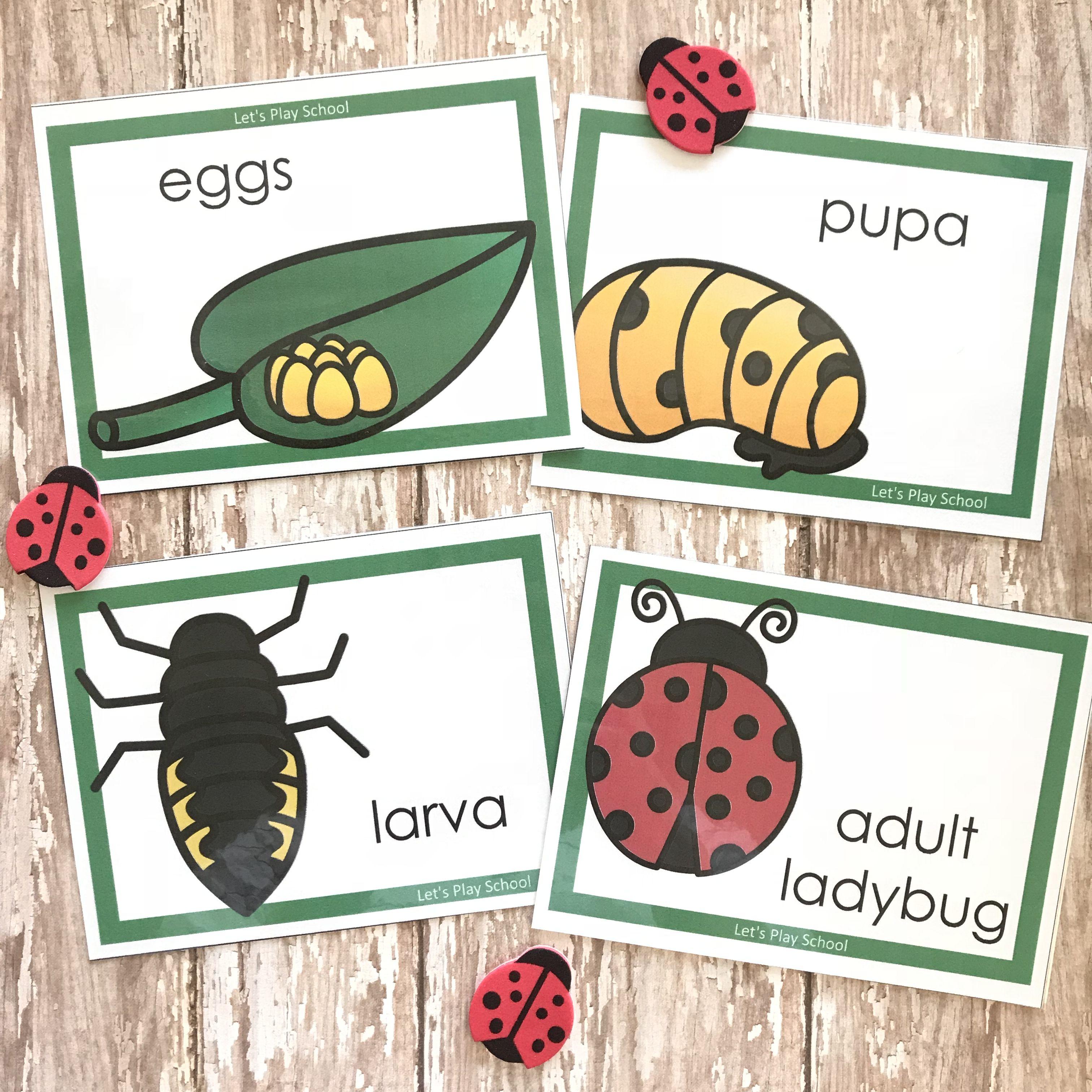 Little School Of Smith S Ladybug Week