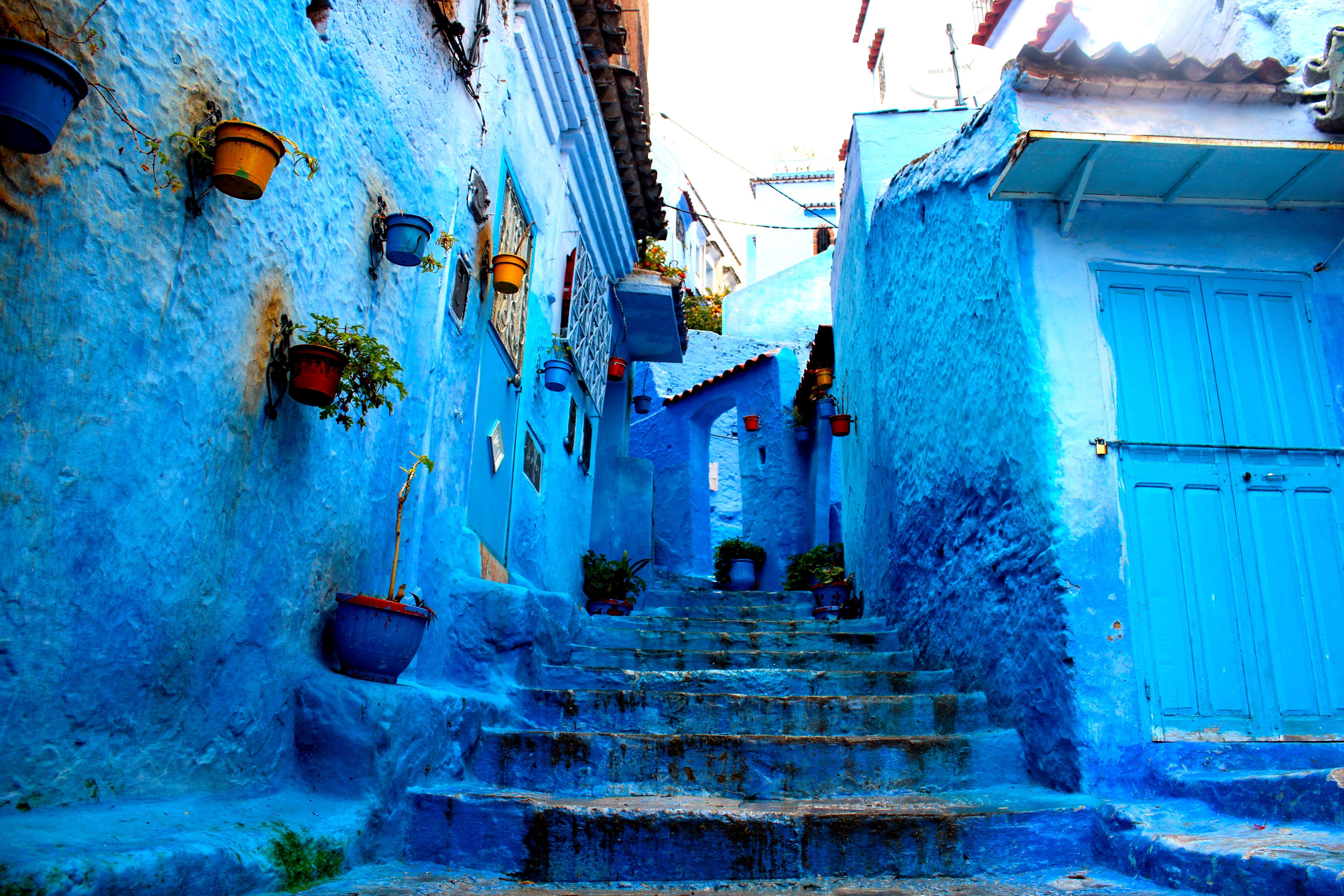 morocco jungle Google Search Blue city, Morocco, City