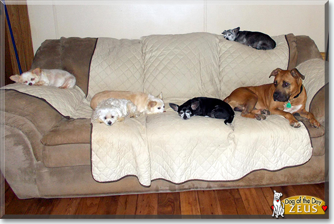 Pin by Irina Ginzburg on dawgs Pitbull terrier, Big dogs