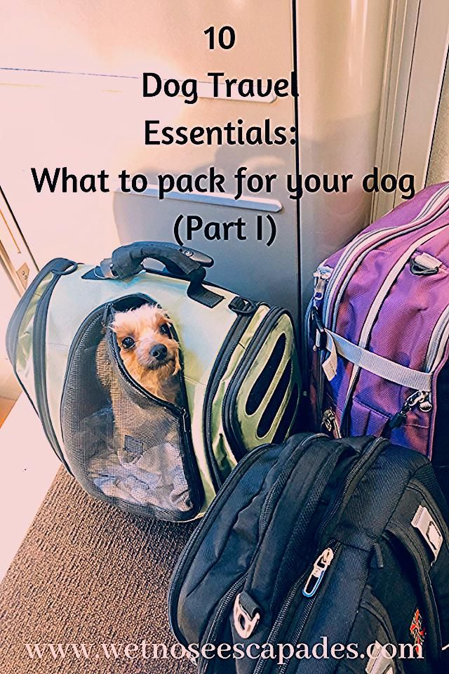 Photo of 10 Dog Travel Essentials: What to pack for your dog (Part I)