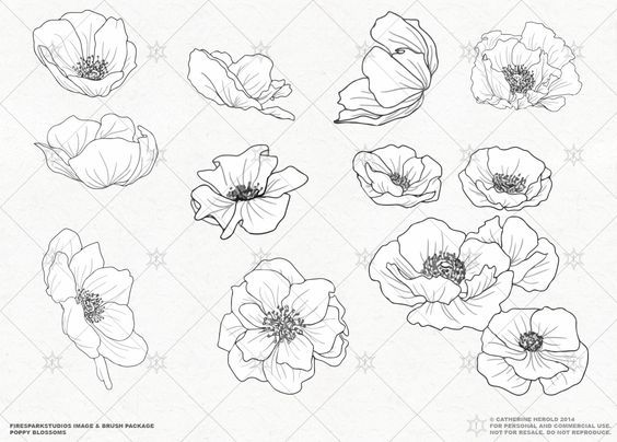 Poppy Line Drawing Tattoo : Vector poppy blossoms illustrations by fire spark studios