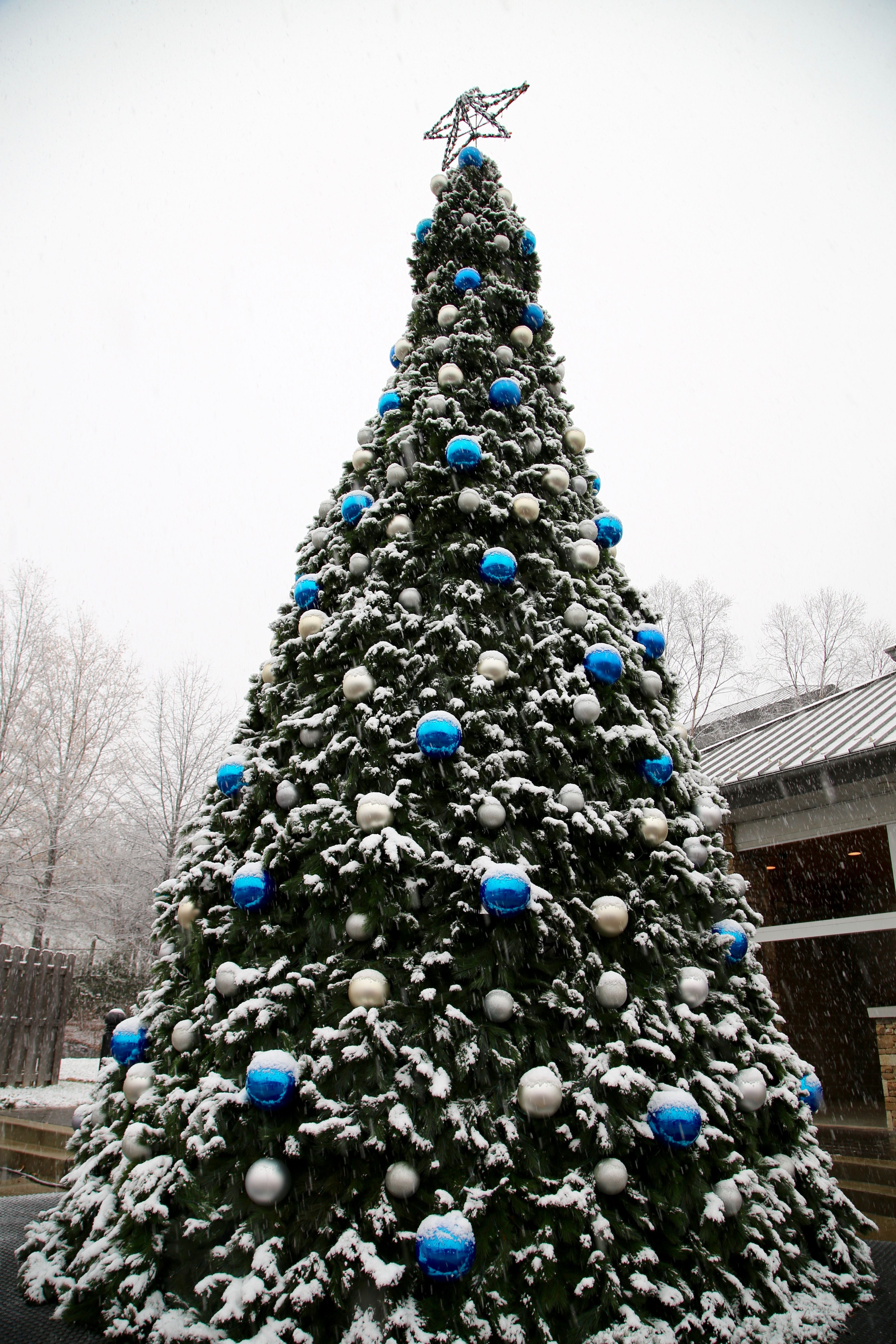 Oh Christmas tree, Oh Christmas tree in Gatlinburg all covered in ...