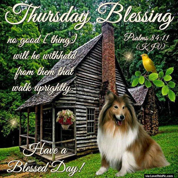Best Thursday Blessings Quotes To Share Happy Thursday - 20 reasons why you should be thankful to have a dog