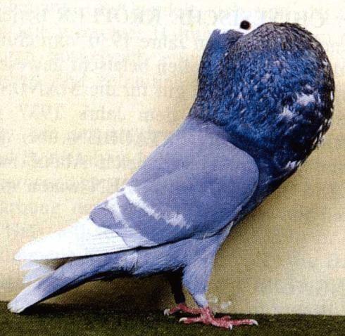 ط ط ظ ظ ط ظ ظˆط ط ط ظ طظ ط ظ ظˆط ط ط ط ظ ظ ظ طھط ظٹط طھ ط ظ ظƒظ ظٹط ط C Pigeon Animals Birds