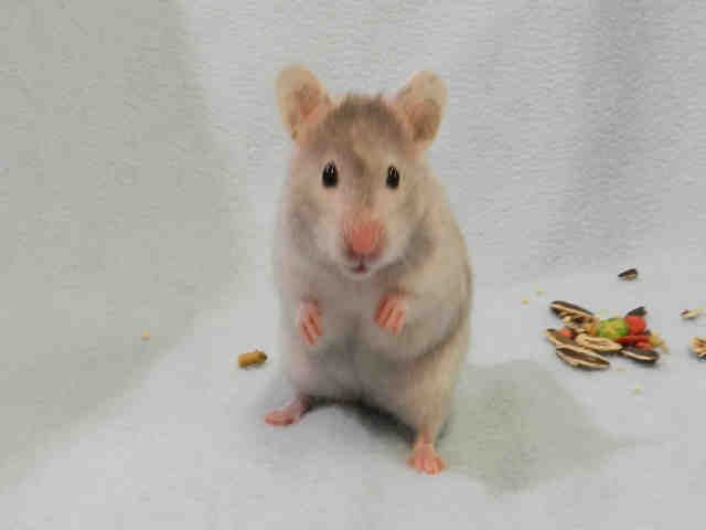 My Name Is Cobweb I Am Available For Adoption At Pet Valu Dufferin King 1176 King Street West 416 916 1199 Come See Me Humane Society Pets Pet Adoption