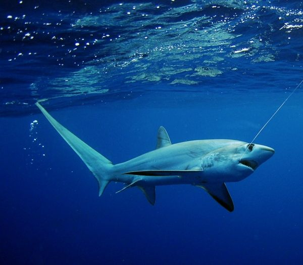 25 Things You Didn't Know About Sharks