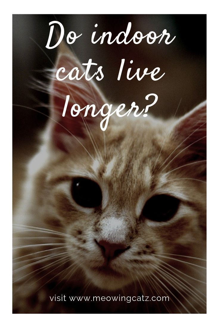 How Long Do Cats Live? Facts about the Average Cat