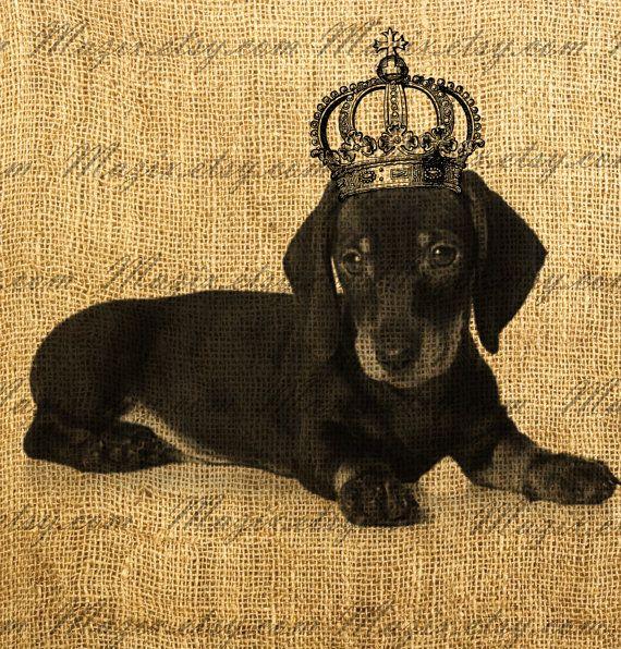 preparate pentru rosturile de dachshund