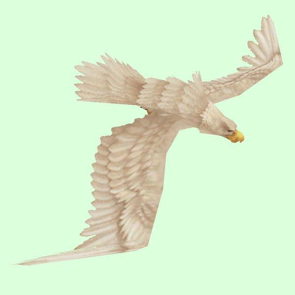 White Eagle Beautiful Birds Birds Eagles