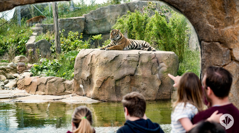 Zoo in Tyumen: general information