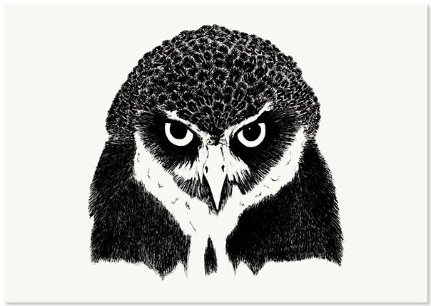 'The Woodlands: The Owl' (artist unknown)