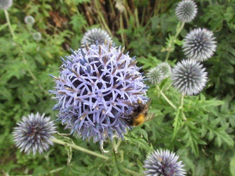 Ongebruikt 13 planten die goed tegen droogte en droge grond kunnen | Planten UW-14