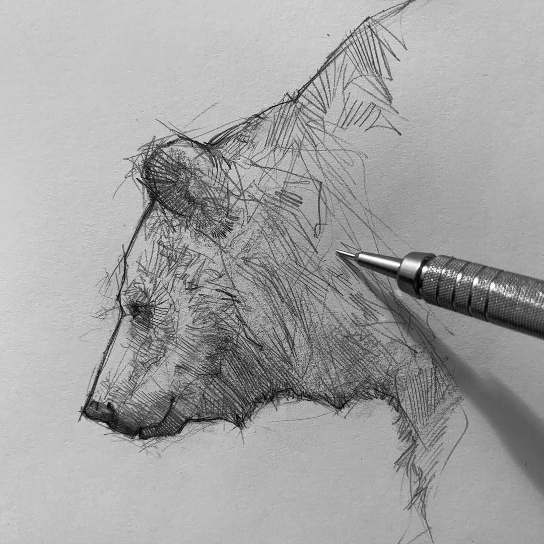 Pencil Sketch Artist Efrain Malo Sketches Animal Sketches