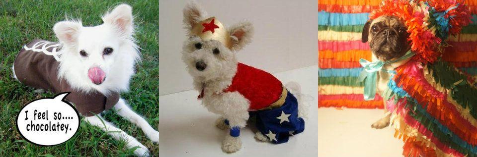 disfraces caseros para perros u ideas para hacerlos en casa