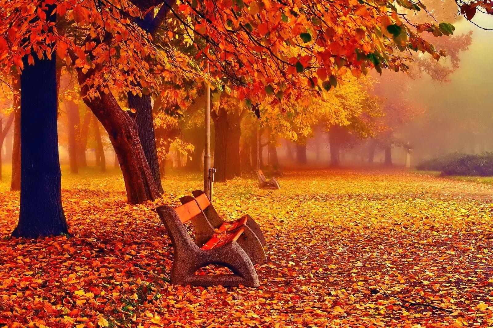 Free Fall Desktop Backgrounds Desktop Wallpaper Fall Autumn Landscape Landscape Wallpaper