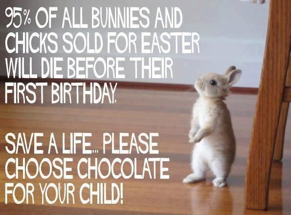 Dont get a bunny for easter choose chocolate instead march dont get a bunny for easter choose chocolate instead march april bunnies make life better pinterest bunny negle Image collections