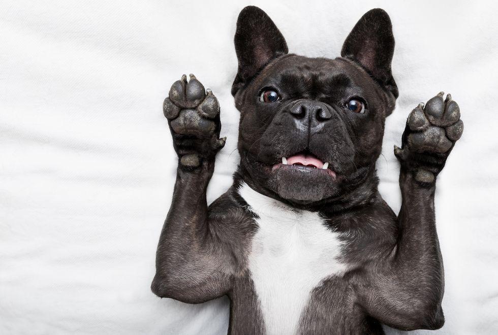 Tips for removing dog urine smell from carpet pets pinterest - Odeur de chien et bicarbonate ...