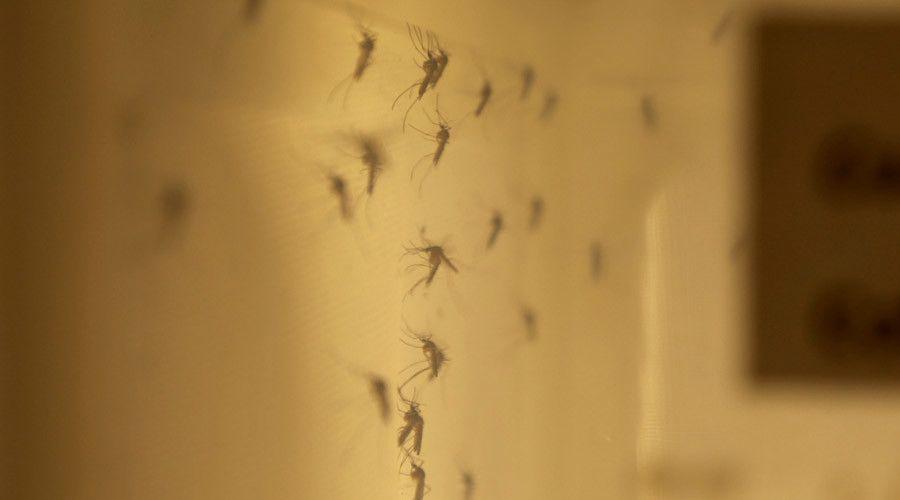 Texas hospitals develop first rapid Zika detection test  http://pronewsonline.com  © Health Canada