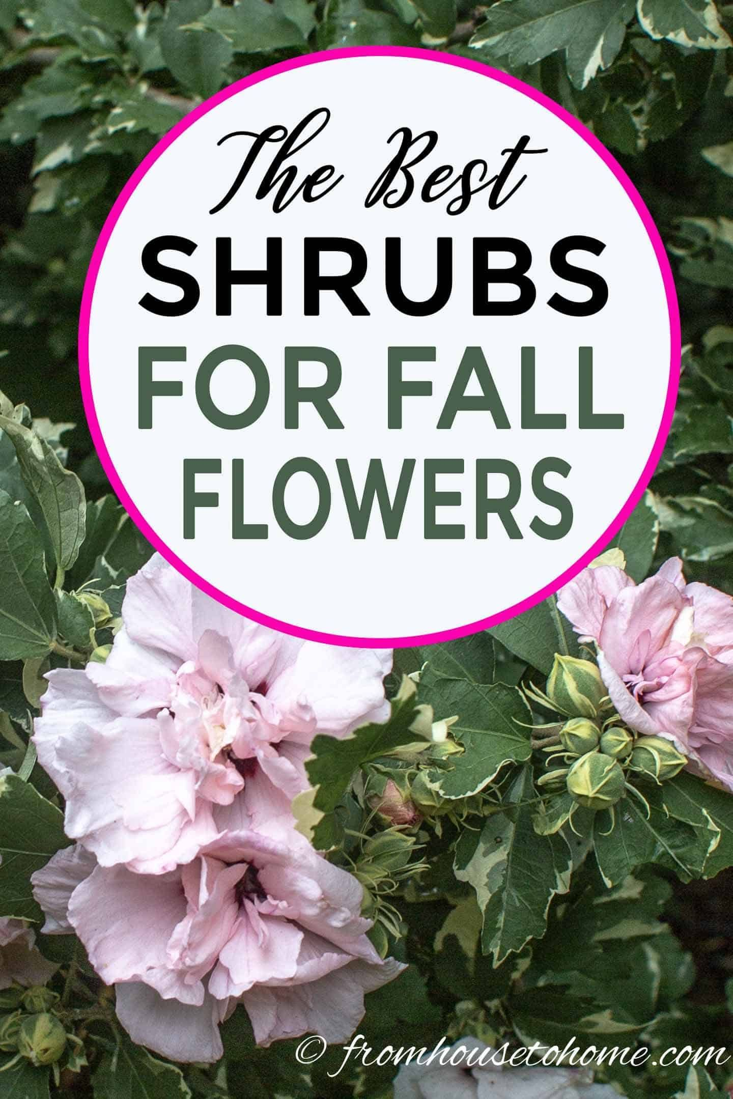 15 of the Best Plants That Bloom In Fall - Gardening @ From House To Home