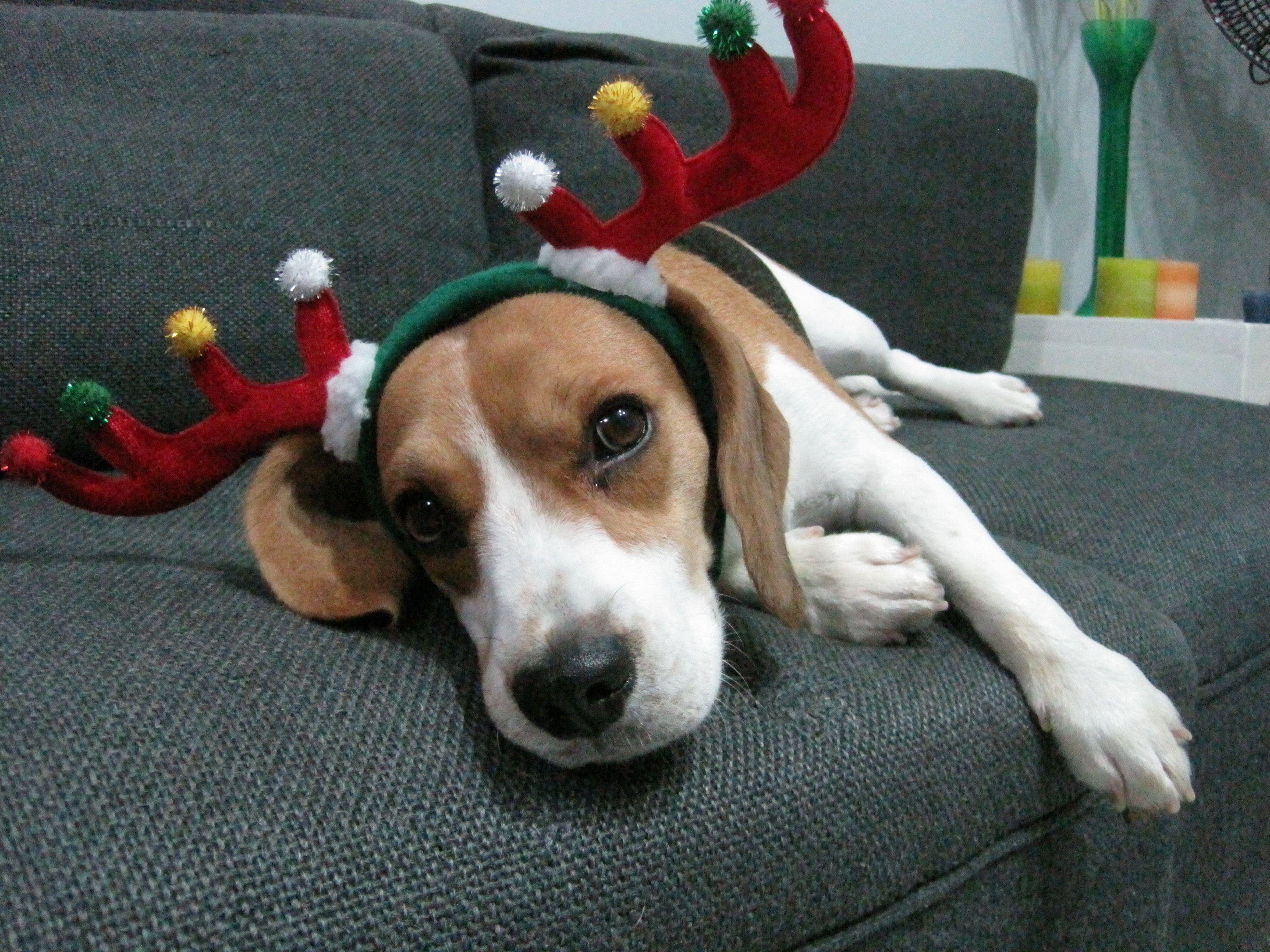 Feliz navidad d all about dogs pinterest