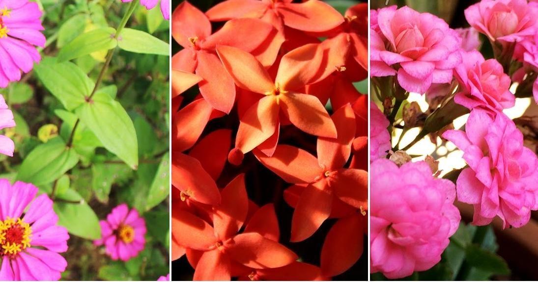 Plantas De Exterior Duraderas
