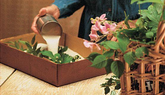 como secar flores - Buscar con Google