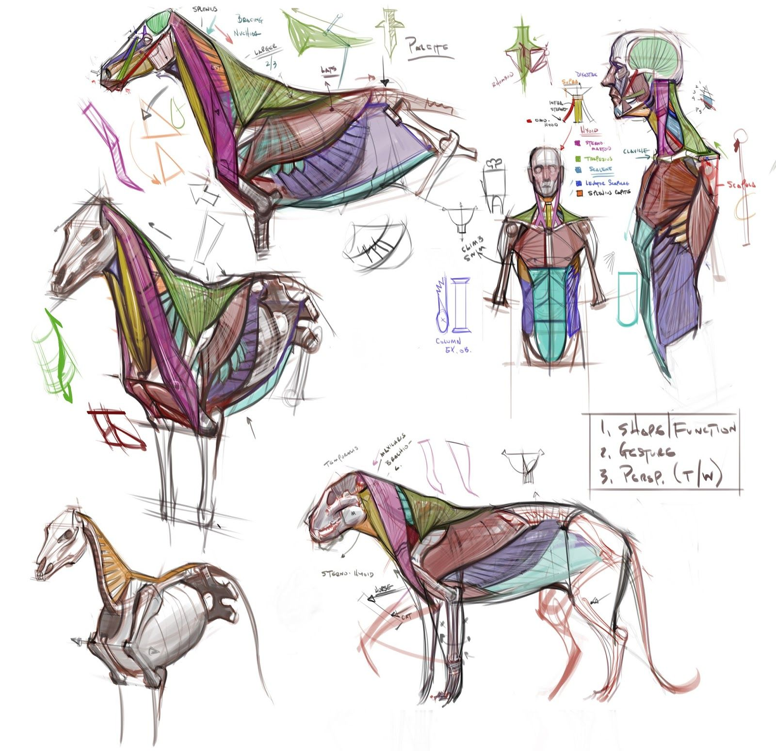figuredrawing.info_news: Lecture Notes | Nonhuman\'s anatomy ...