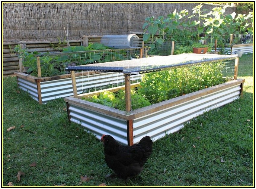 Diy fence with corrugated iron and timber google search for Raised vegetable bed ideas