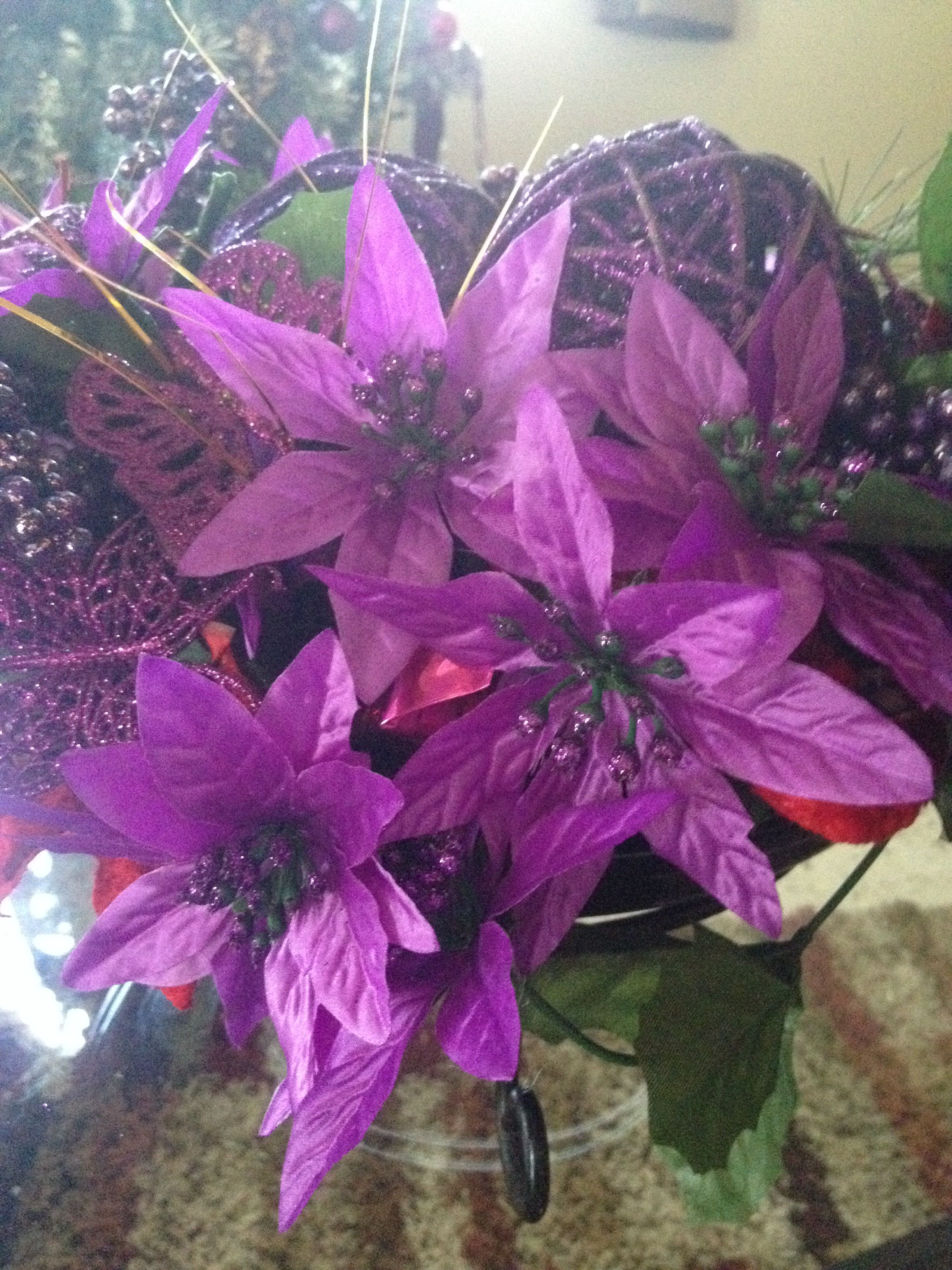 """The """"pascuas"""" is the official flower of Puerto Rican"""