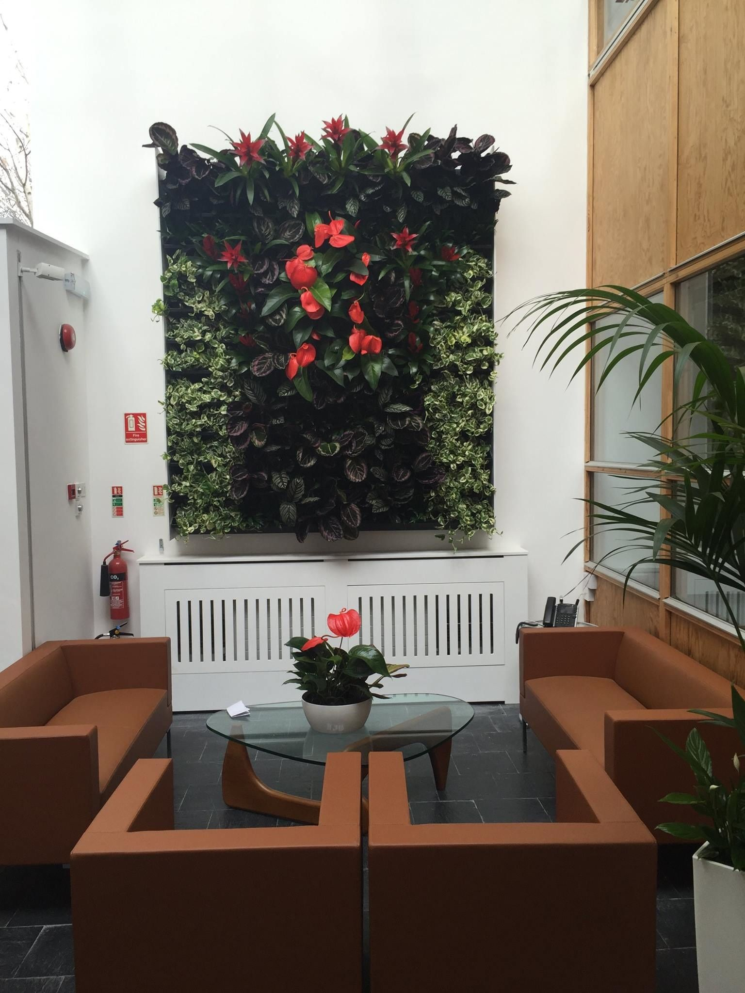 Living Wall For An Office Reception