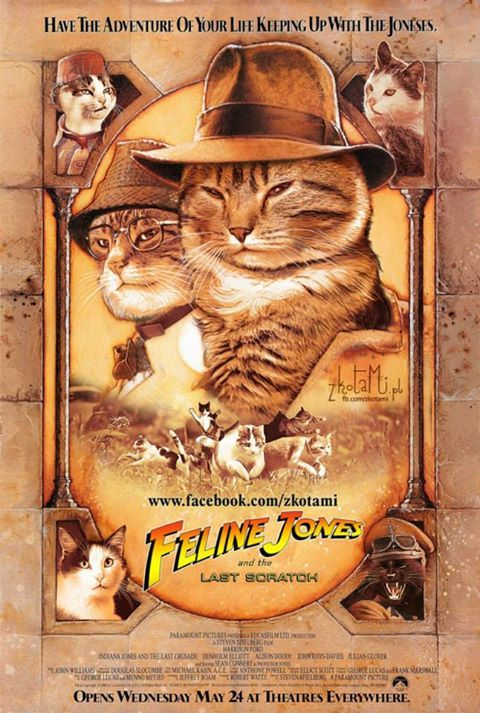 Image result for indiana jones cat