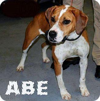 Chilhowie, VA Hound (Unknown Type)/Boxer Mix. Meet Abe a