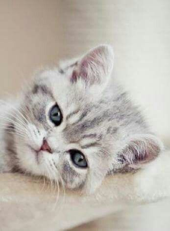 """(""""Chances are that a man who can nuzzle a kitten is also open and caring in other facets of his life."""" -- Barbara L. Diamond)"""