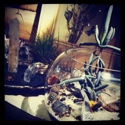Building a desert terrarium is a great way to bring the natural world into your   Building a desert terrarium is a great way to bring the natural world into your