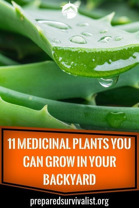 11 Medicinal Plants You Can Grow In Your Backyard  Prepared Survivalist  Survival gear