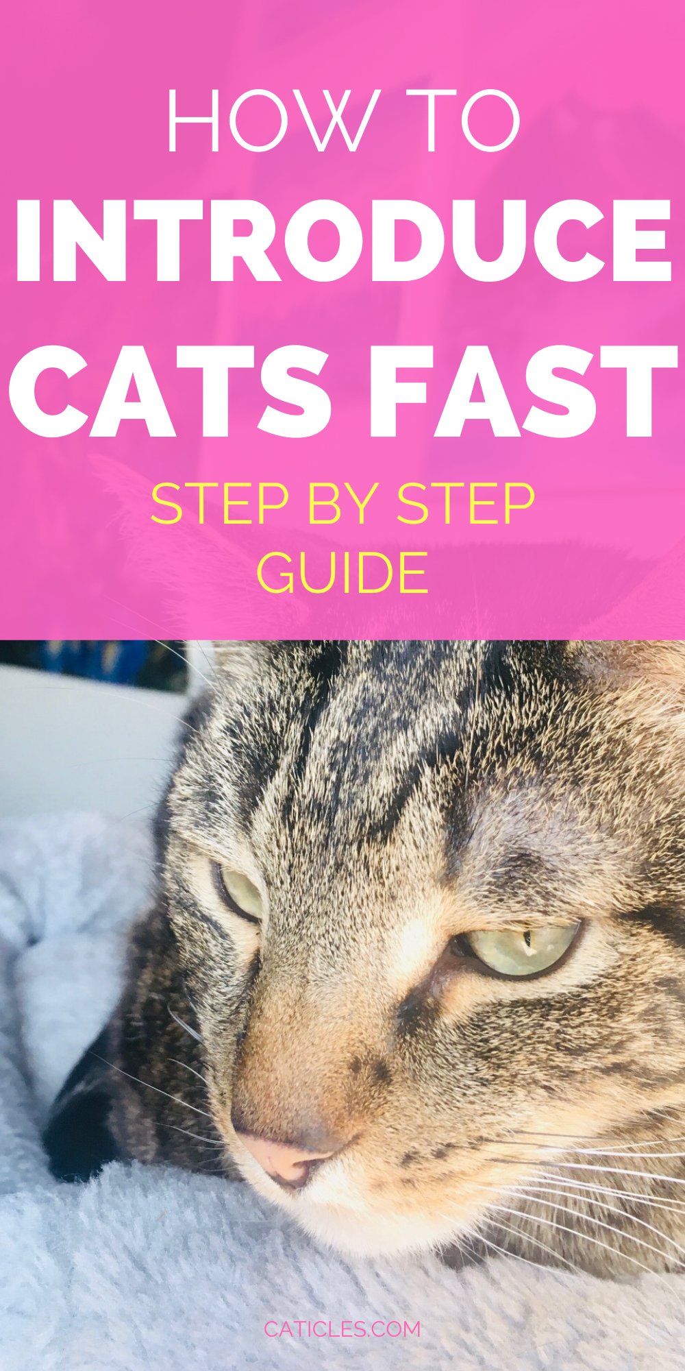 How To Introduce Cats Fast The Complete Guide To A Happy Household In 2020 How To Introduce Cats Pet Care Cats Introducing A New Cat