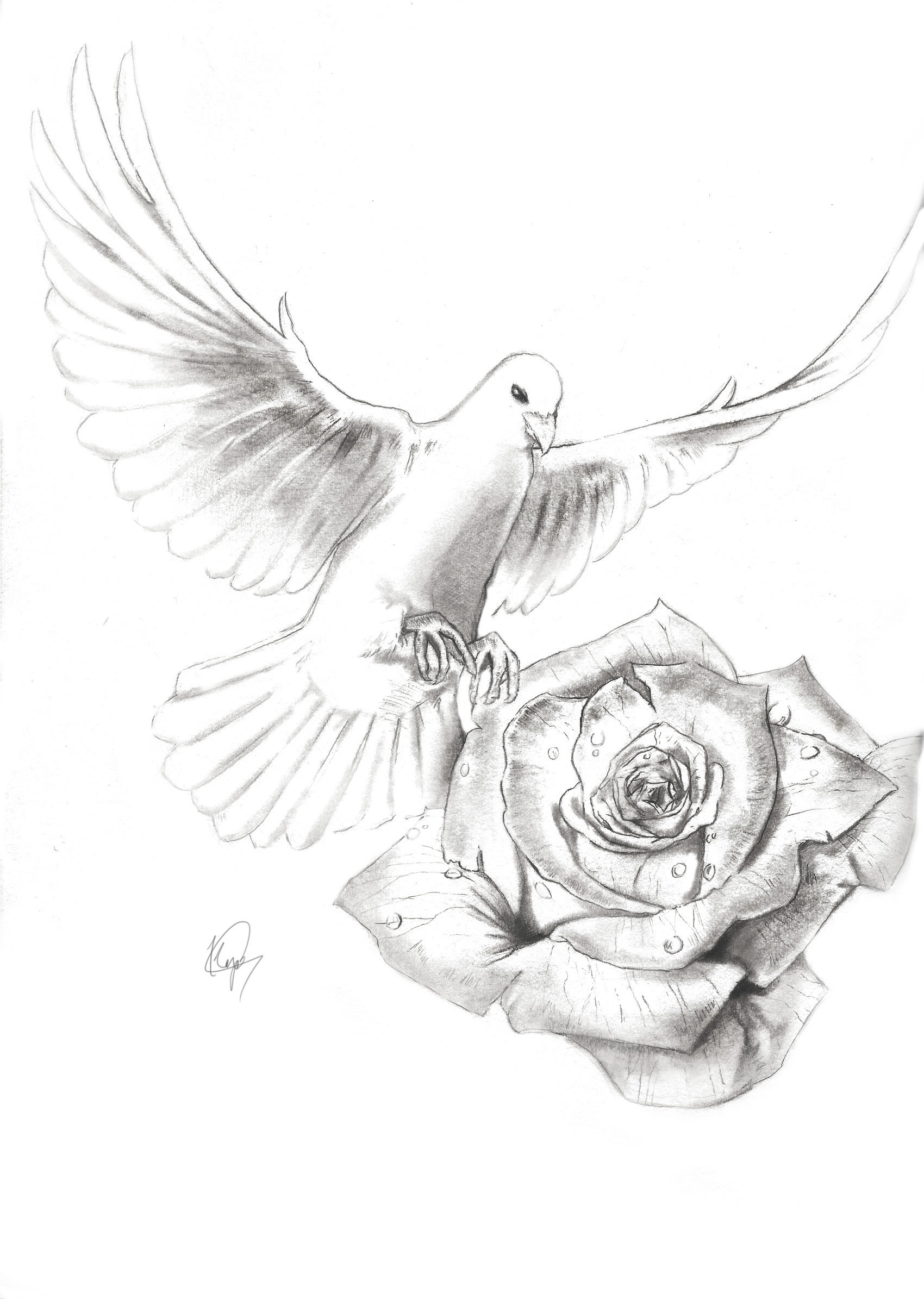 Realistic Dove Drawing