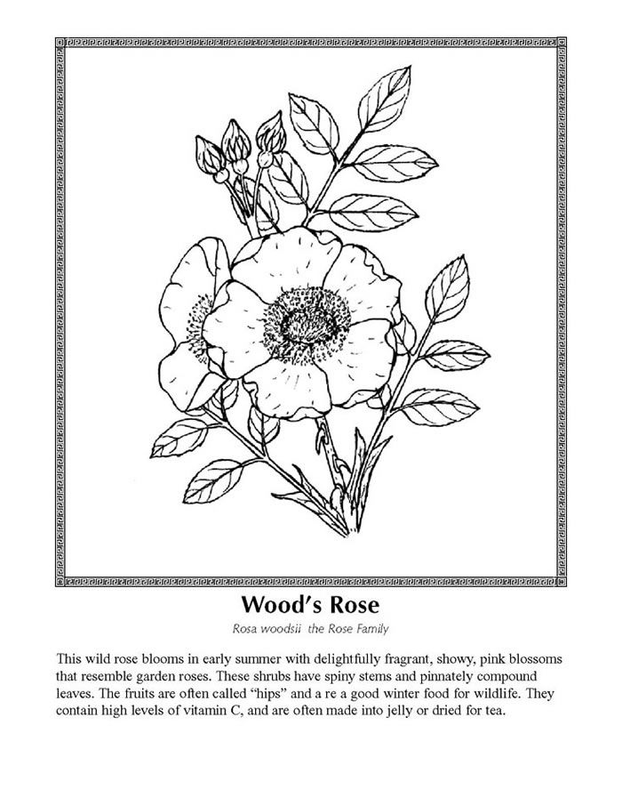 8857cfb497fd763ebb47eadcc59b7cc1 including wildflower coloring pages coloring free download printable on wildflower coloring pages likewise wildflower coloring pages coloring free download printable on wildflower coloring pages together with wild flowers coloring pages google search piante pinterest on wildflower coloring pages likewise wildflower coloring pages coloring free download printable on wildflower coloring pages
