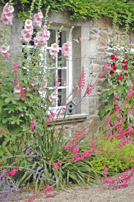 Like The Cottage Garden Look Hollyhocks Are A Great Plant To Include To Achieve It And They Als Cottage Garden Design English Cottage Garden Beautiful Gardens
