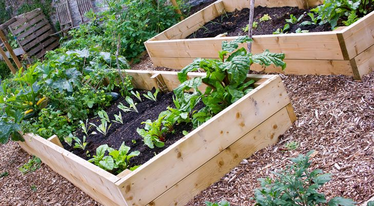 8857fd5fbbe088c227f62e3c70c4d3ef - Better Homes And Gardens Raised Vegetable Beds