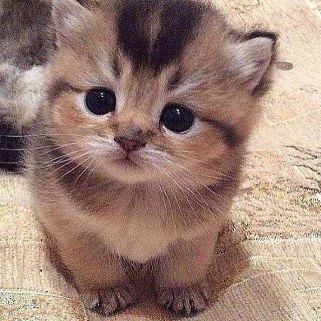 No No I Didn T Do It He Is Lying Http Ift Tt 2evyrgu Kucing Bayi Bayi Hewan Anak Kucing Lucu