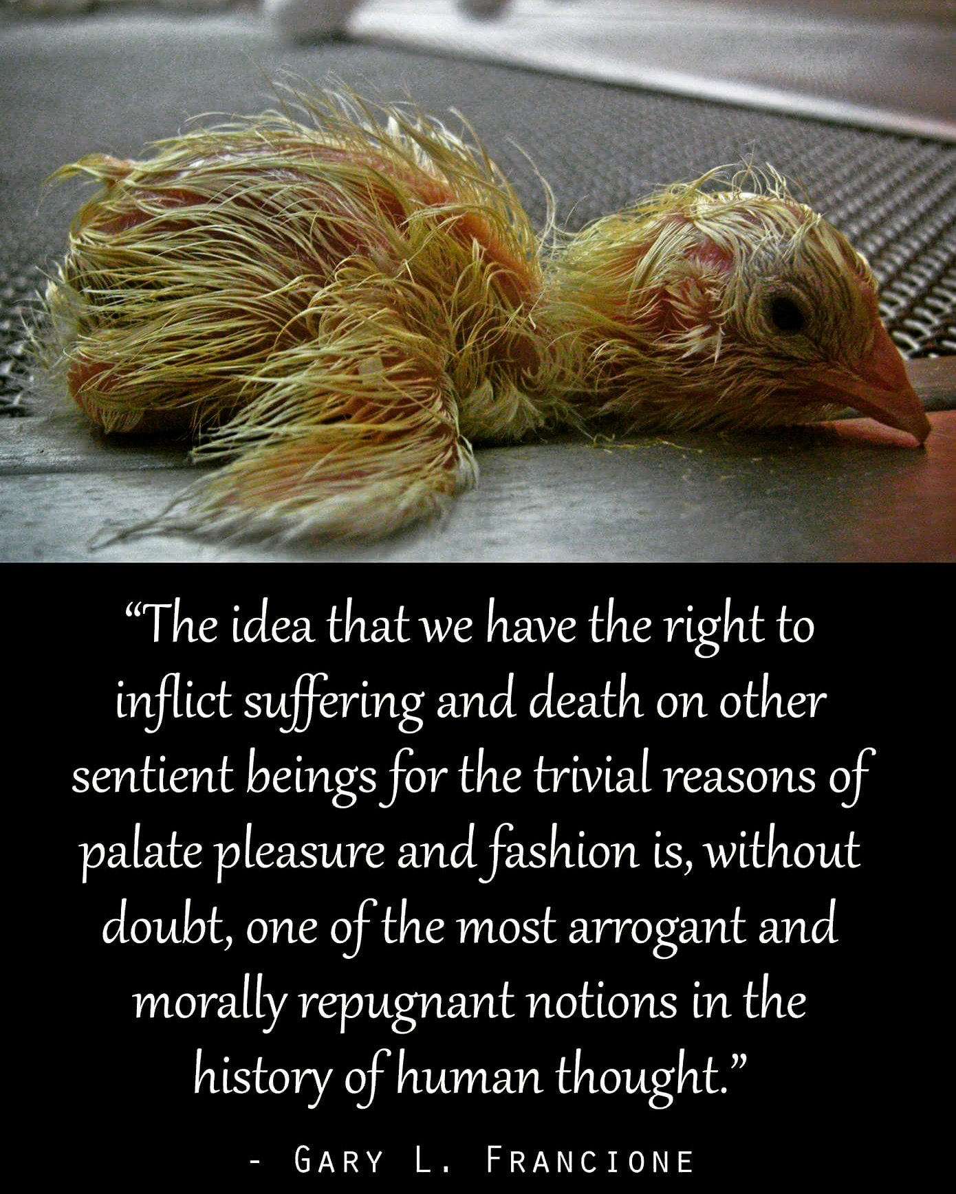 Animal Cruelty Quotes Pinthe Waterlanders