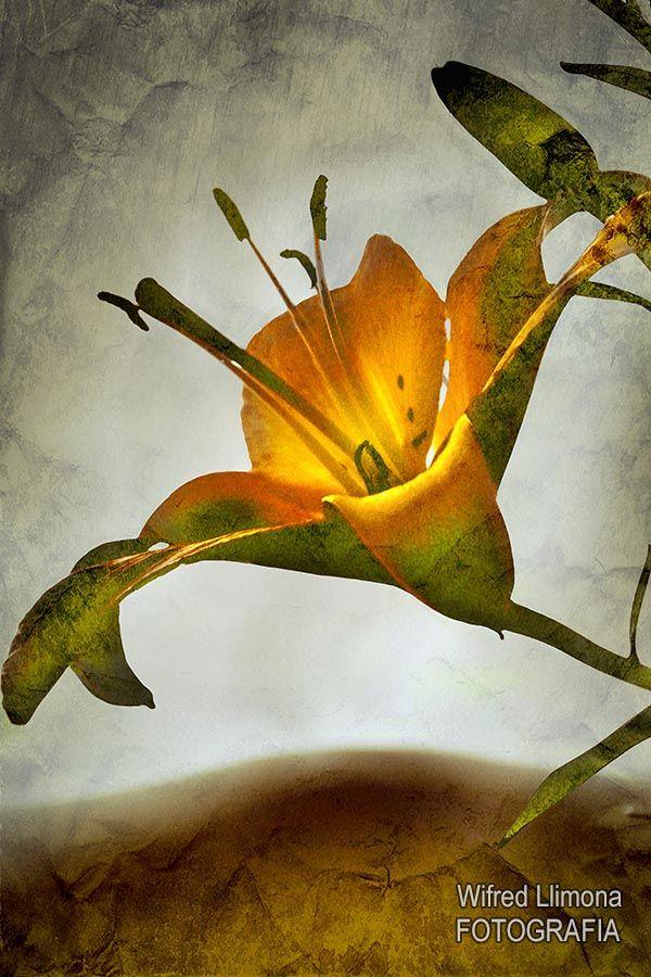 Fotografía para decorar. Detalle de flor de Wifred Llimona. Ref: F00245 http://www.lallimona.com/foto/flora/