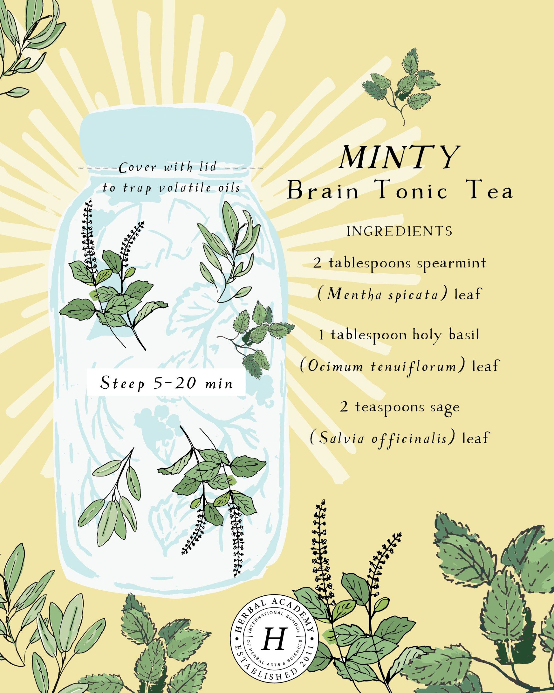 Our Favorite Study Herbs (Plus A Memory Tonic Tea Recipe) is part of Studying herbs, Herbalism, Herbs, Tea blends, Tea recipes, Herbal medicine - Here are some of our favorite study herbs that can help you cope with stress, stay focused, and calm your mind during this hectic back to school season!