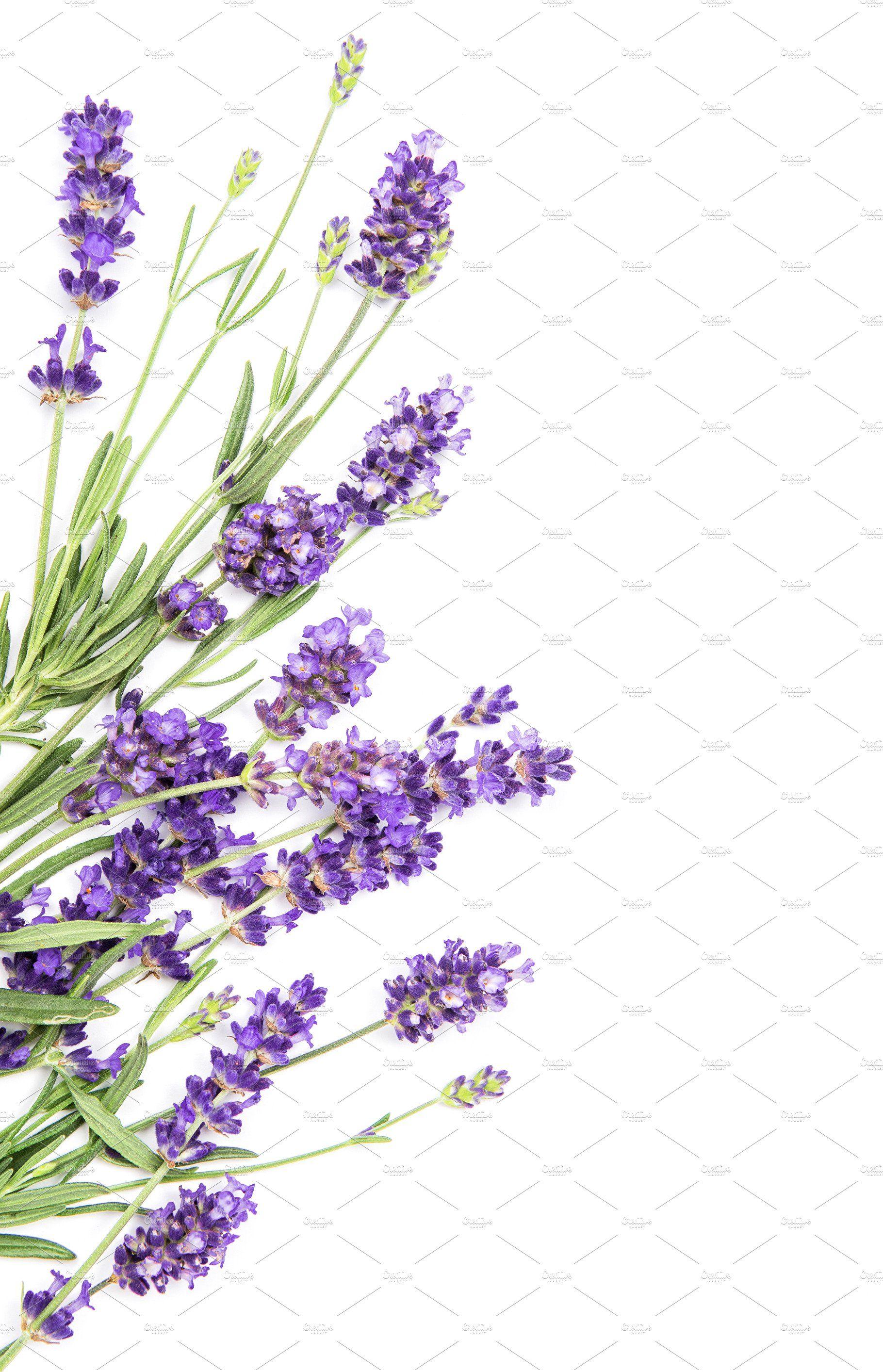 Lavender Flowers On White Background In 2020 Flower Pictures White Background Lavender Flowers