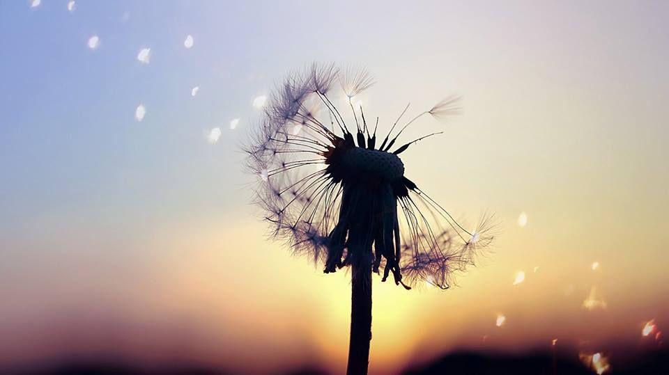 Wenn dir jemand erzählt, dass die Seele mit dem Körper zusammen vergeht, und dass das, was einmal tot ist, niemals wiederkommt, so sag ihm: Die Blume geht zugrunde, aber der Same bleibt zurück und liegt vor uns, geheimnisvoll wie die Ewigkeit des Lebens. ~Khalil Gibran