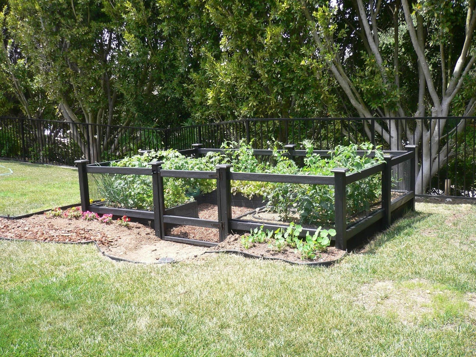 Engrossing Vegetable Garden Ideas On A Budget Garden Fence Kit Garden Fence Kit Garden Garden I Cheap Garden Fencing Fenced Vegetable Garden Small Garden Fence