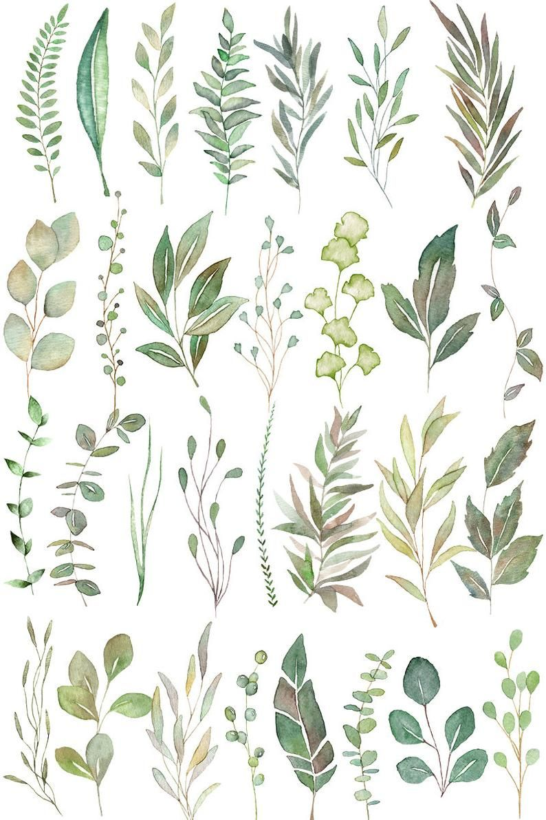 Watercolor Leaves Fern Clipart Forest Leaves Greenery Clipart Png Files Eucalyptus Clipart Wedding Invitation Instant Download Green Watercolor Leaves Leaf Drawing Green Watercolor