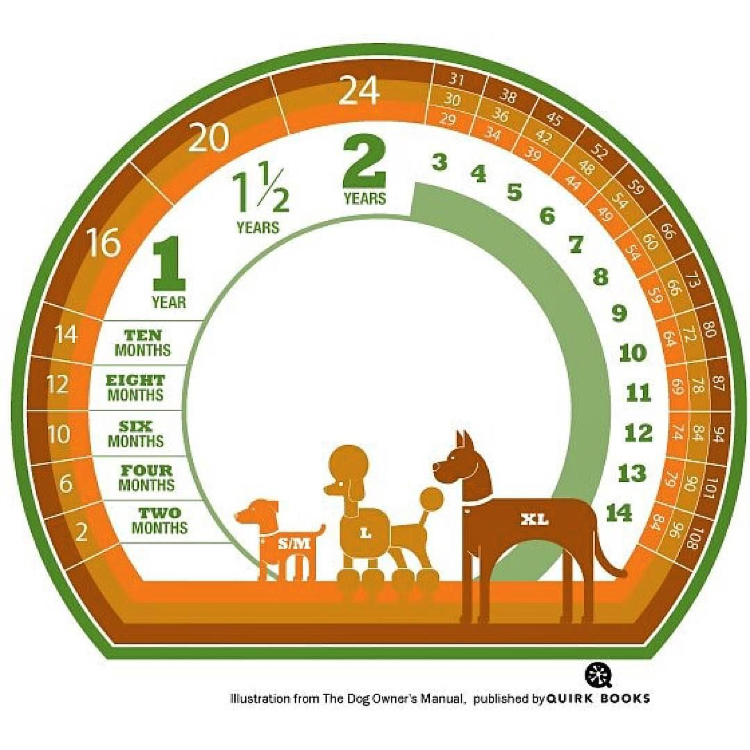 Its a popular misconception that dogs age 7 years each calendar its a popular misconception that dogs age 7 years each calendar year human nvjuhfo Image collections
